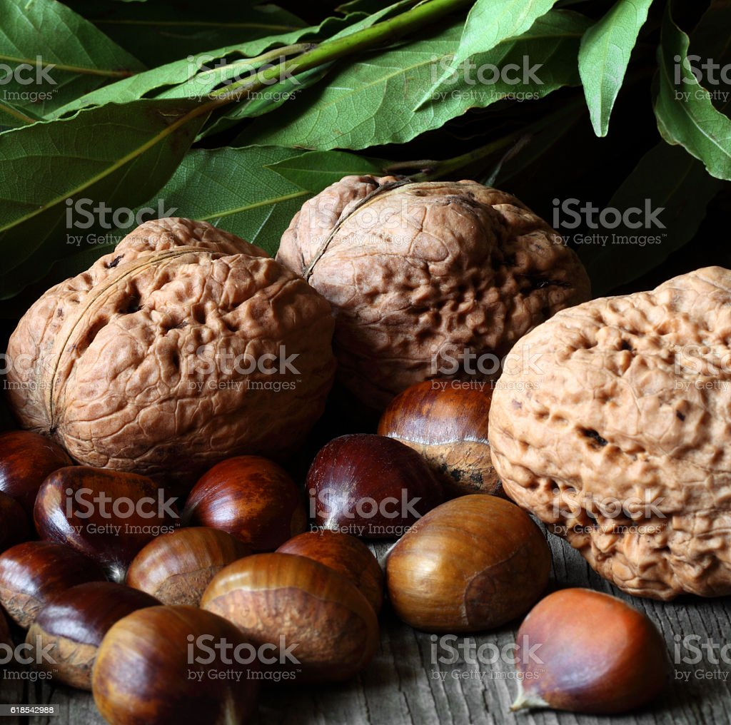 Walnuts and chestnuts stock photo