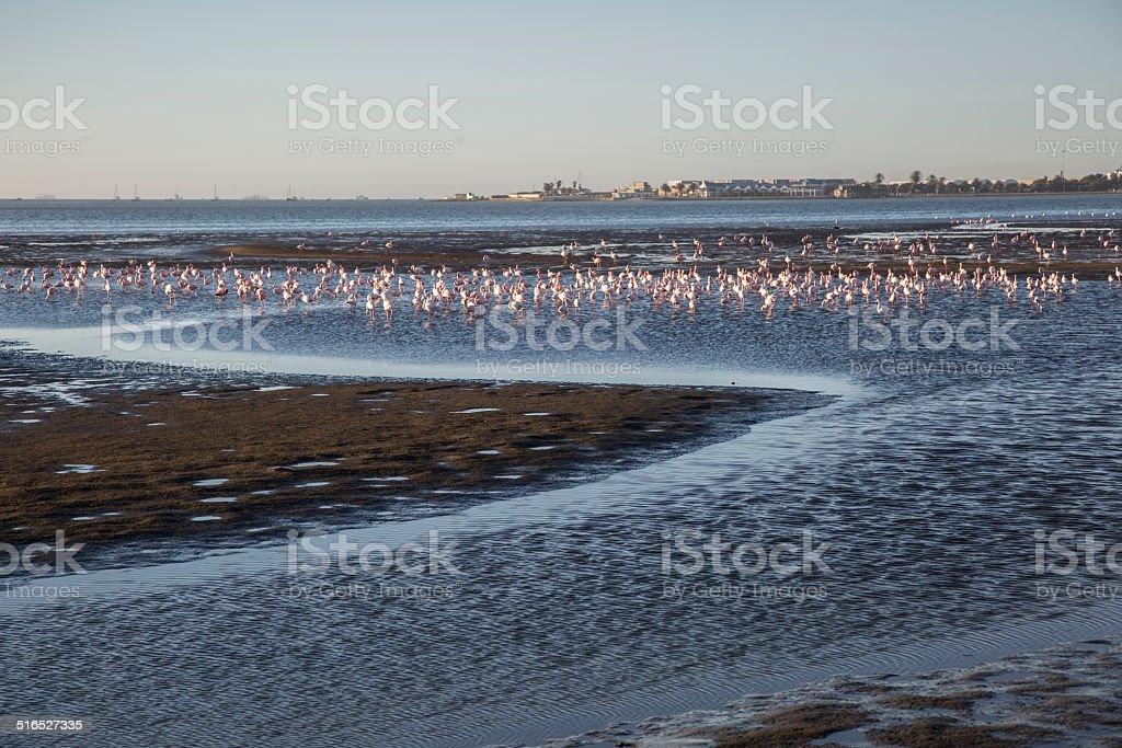 Walvis Bay, Namibia, herons at sunset lagoon stock photo