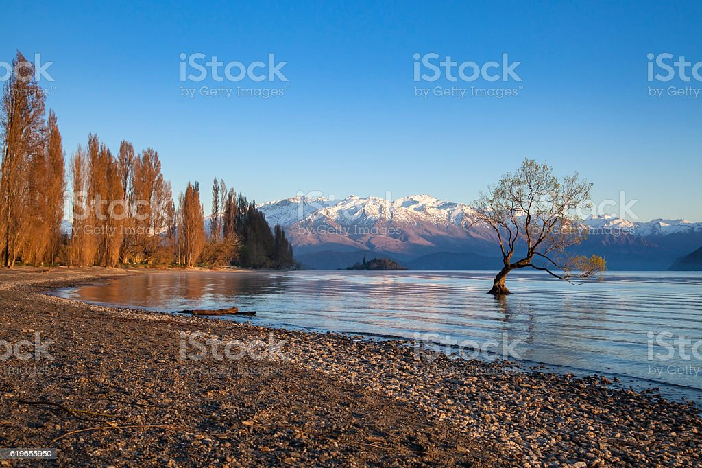 Wanaka tree in New Zealand stock photo