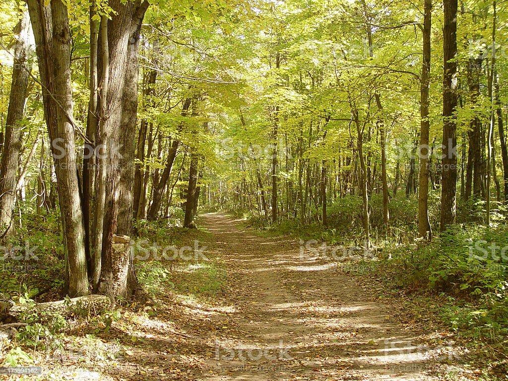 Wander Through The Woods stock photo