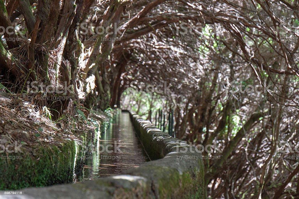 Wanderweg Levada mit überhängenden Lorbeerbäumen stock photo