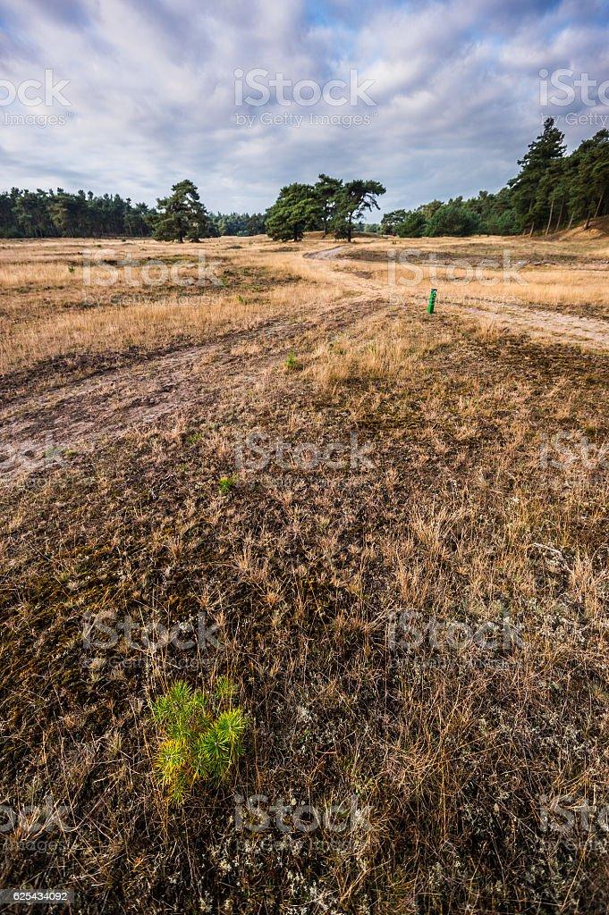 Wanderwege in De Hoge Veluwe stock photo