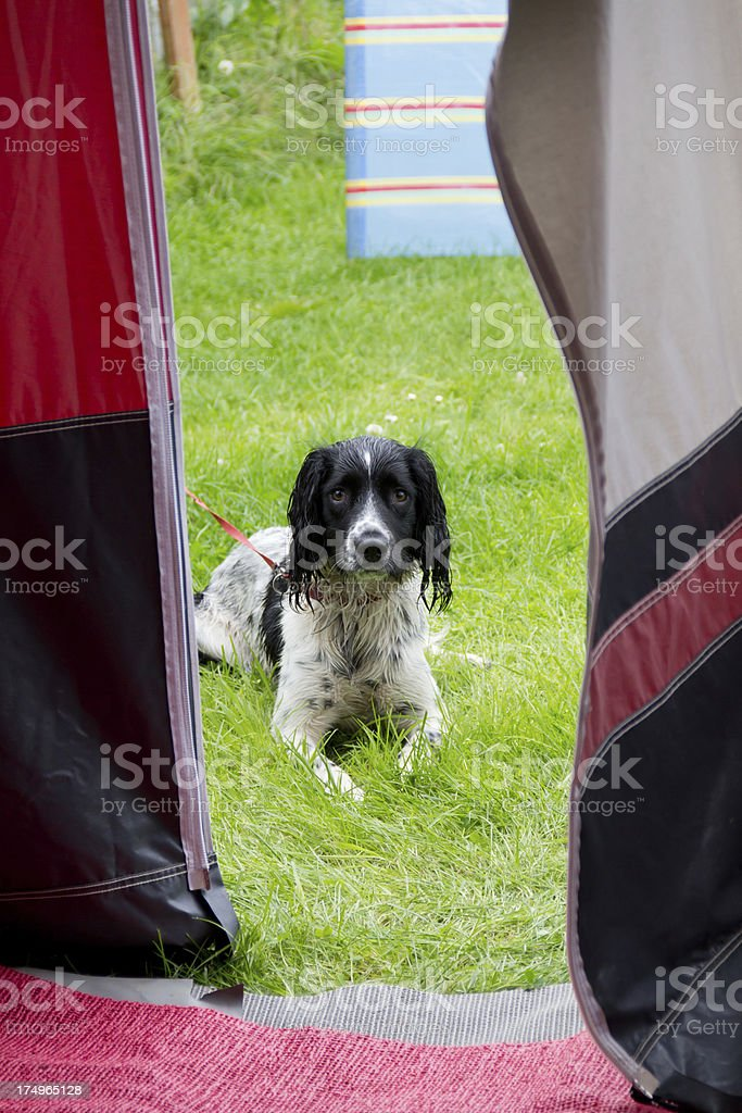 I want to come in....please royalty-free stock photo