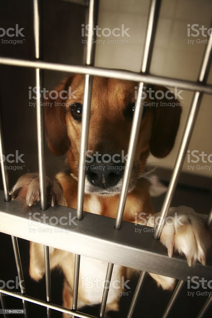Wanting Attention royalty-free stock photo