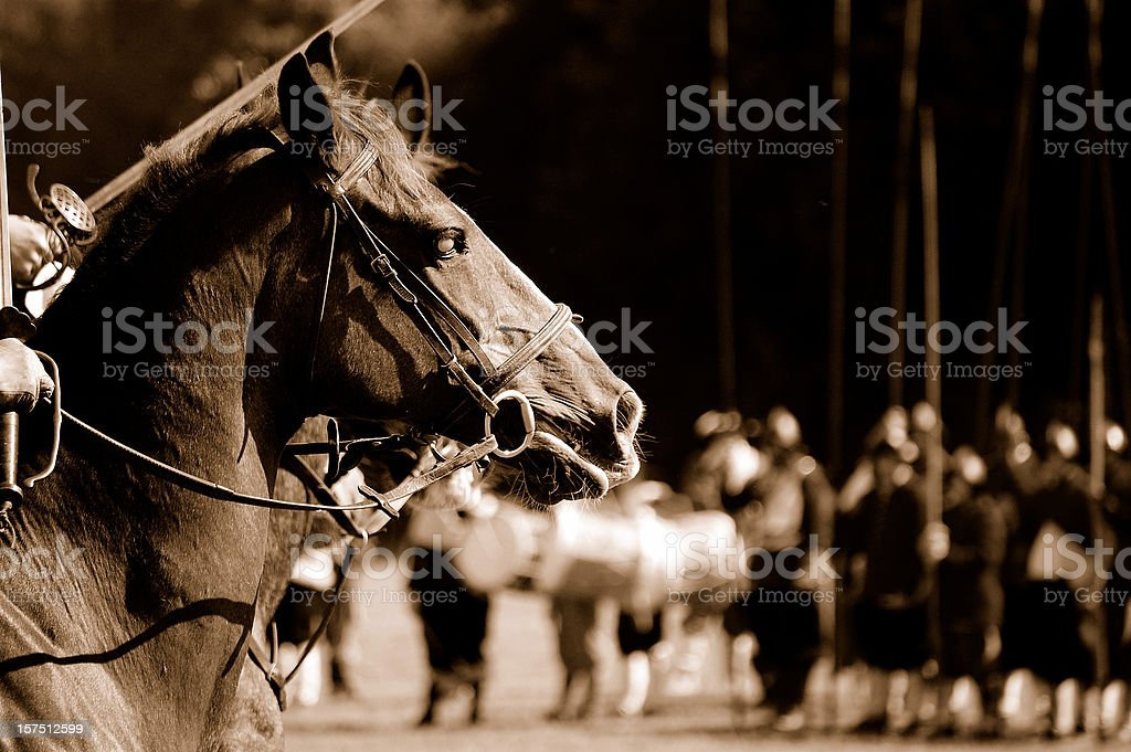 War horse. stock photo