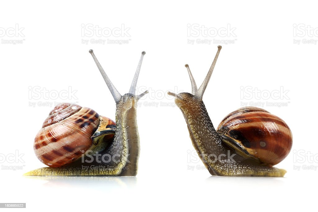 War of the Snails royalty-free stock photo