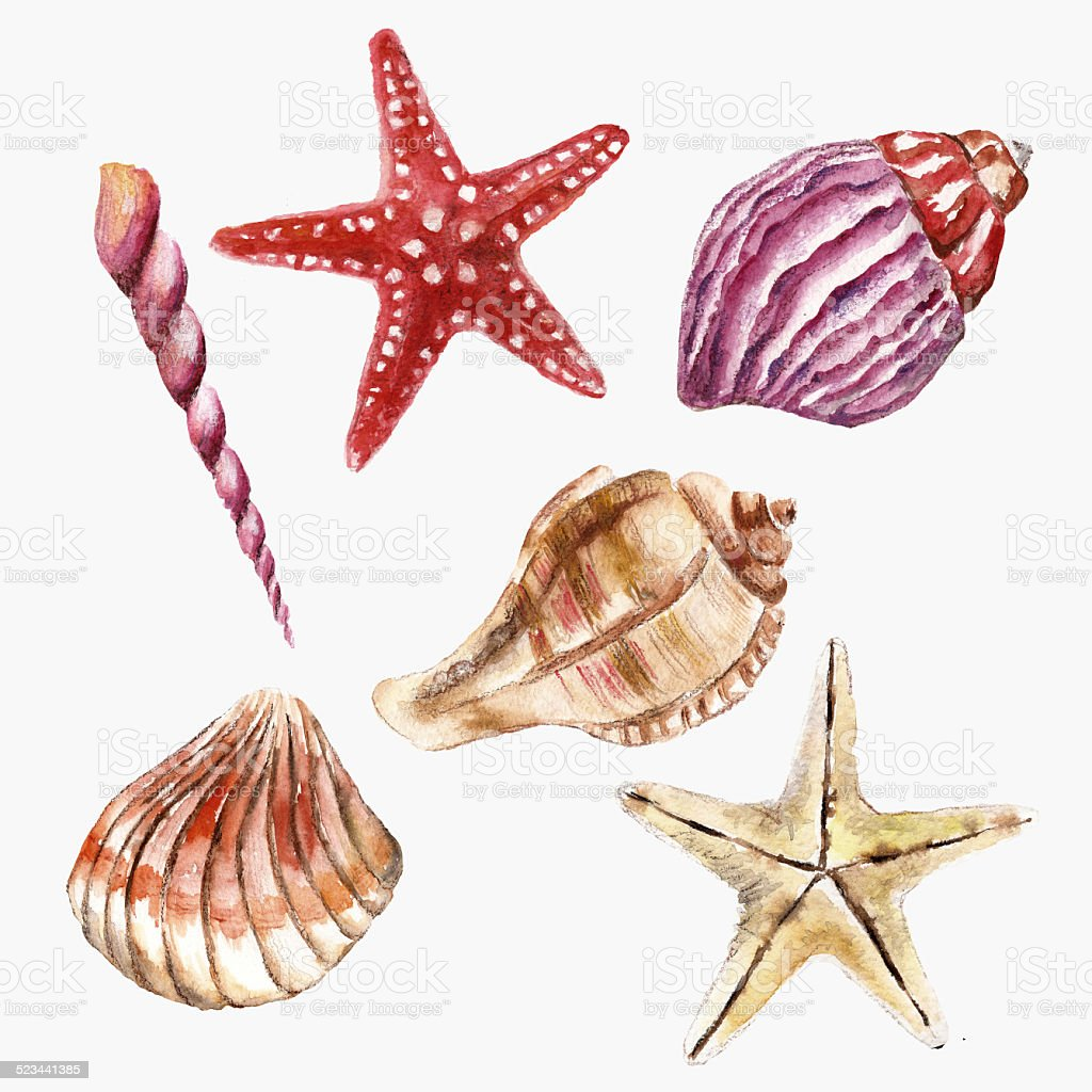 Warercolor set with sea-shell vector art illustration