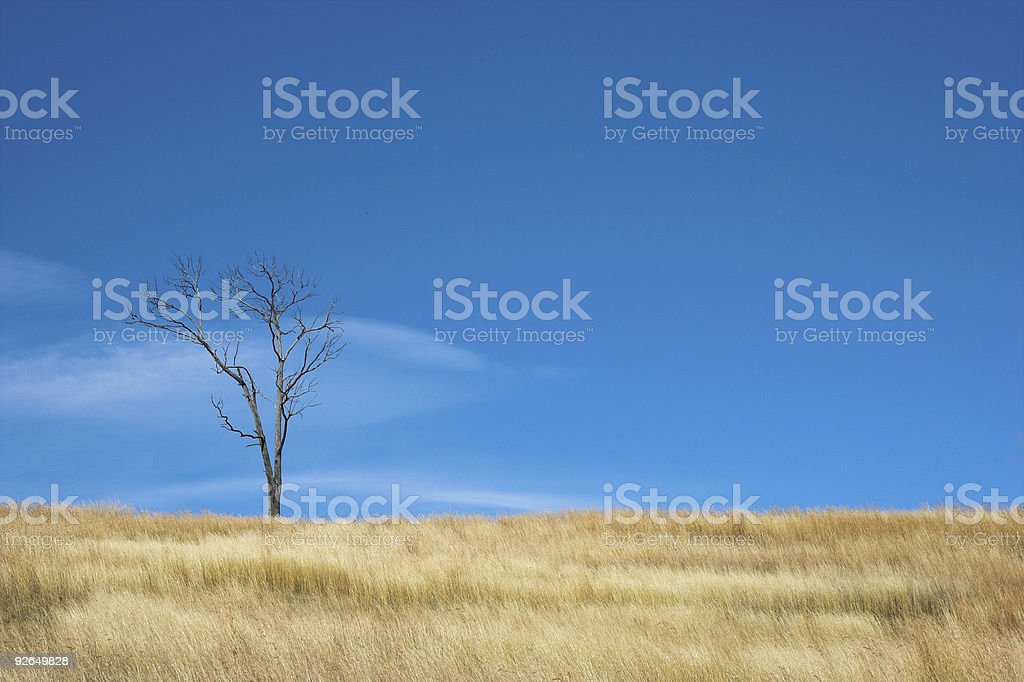 Warm African winter landscape royalty-free stock photo