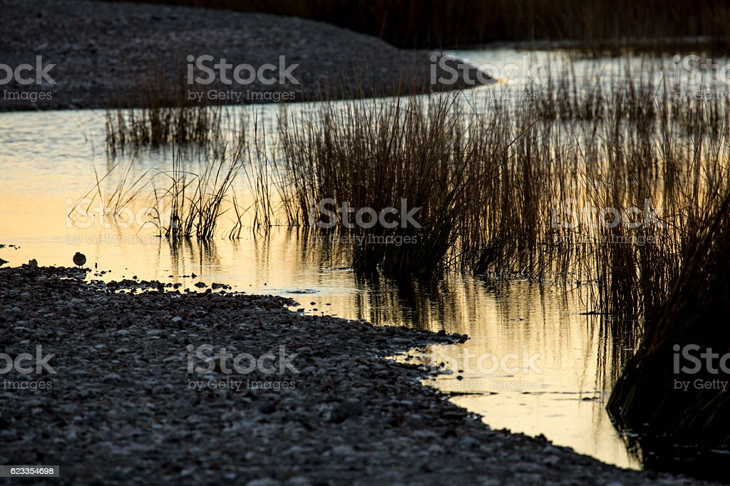 Warm, amber colors of a marsh after sunset in Connecticut. stock photo