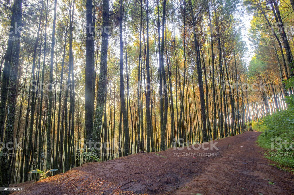 Warm and silence Forest path in the morning stock photo