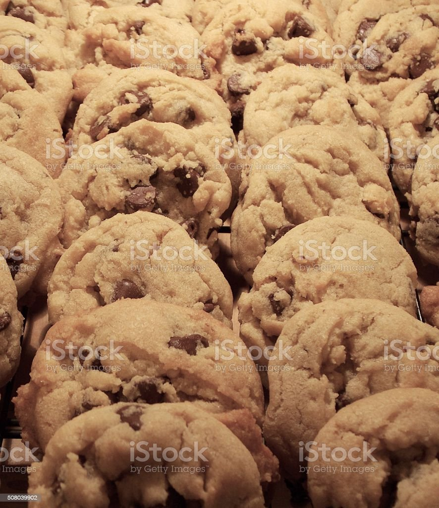 Warm Chocolate Chip Cookies from the Oven stock photo