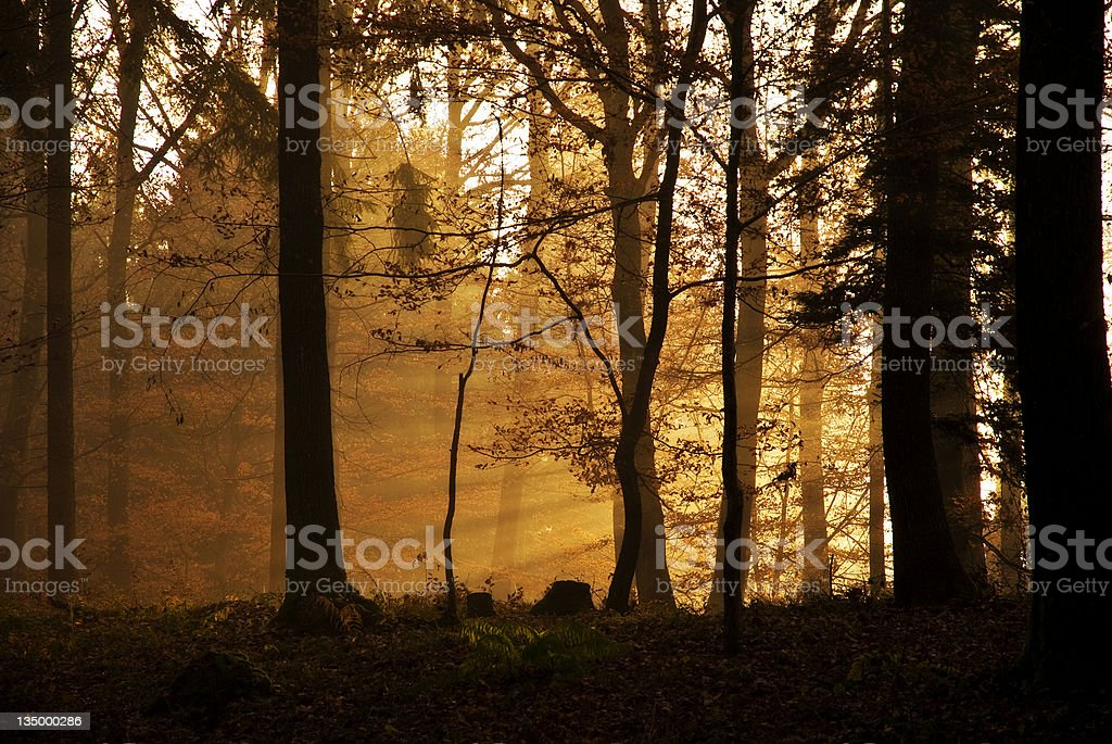 Warm foggy morning in November royalty-free stock photo