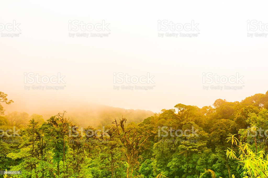 Warm light over a forest and fog in morning stock photo