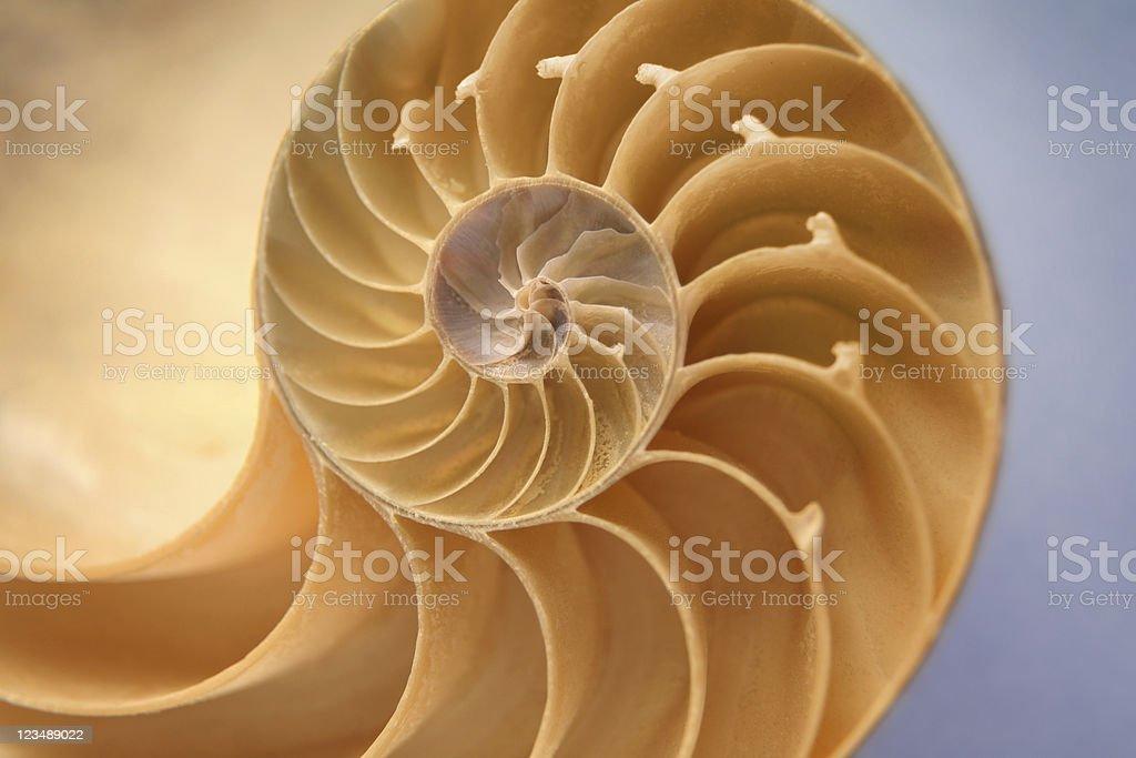 warm Nautilus stock photo