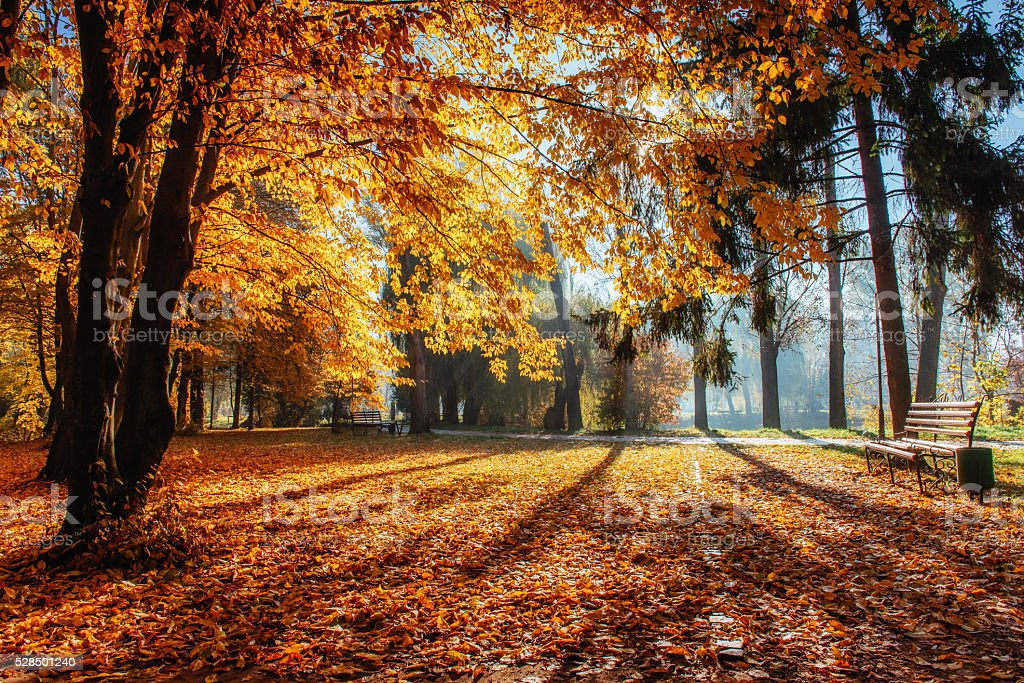 Warm peaceful day in the autumn park. stock photo