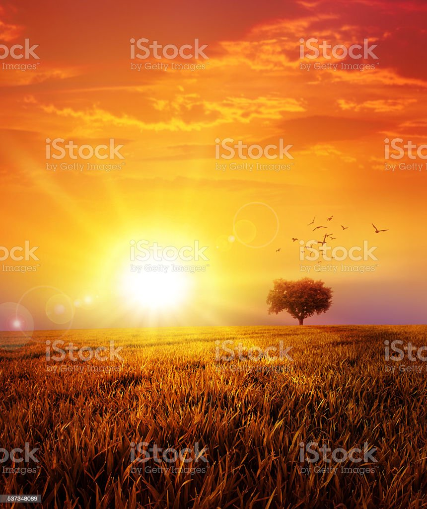 Warm sunset on the wild meadow stock photo