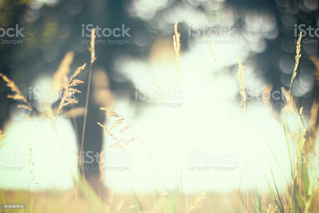 Warm vintage blurry photo of summer meadow at sunset. stock photo
