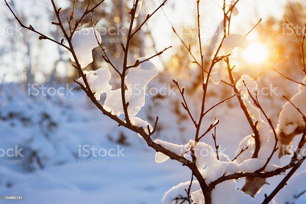 Warm winter sun stock photo