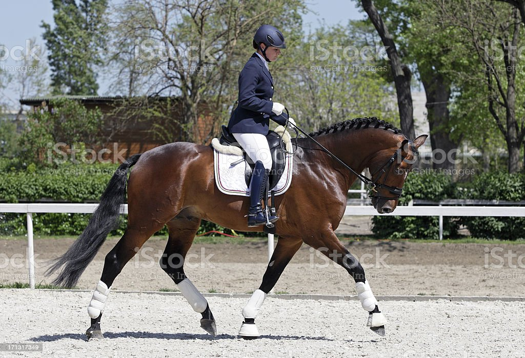 Warming up dressage stock photo