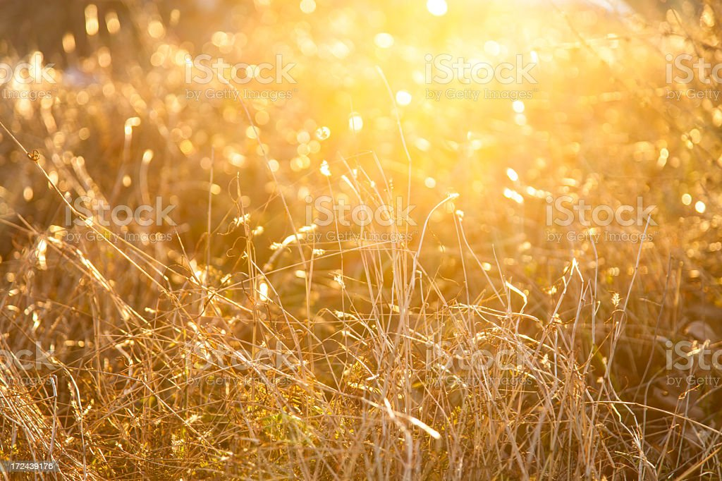 warmth royalty-free stock photo