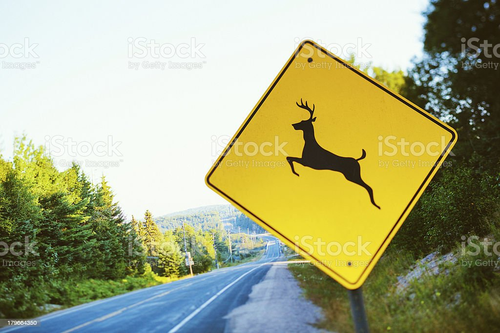 Warning Deer Sign, Country Road royalty-free stock photo