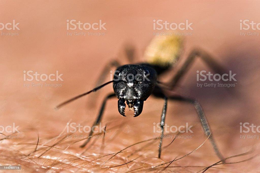 Warrior termite royalty-free stock photo