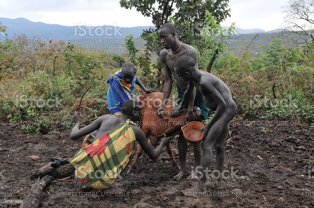 Warriors of the Surma tribe at a blood drinking ritual stock photo