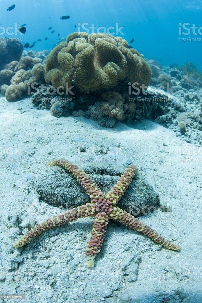 Warty Starfish on Seafloor stock photo