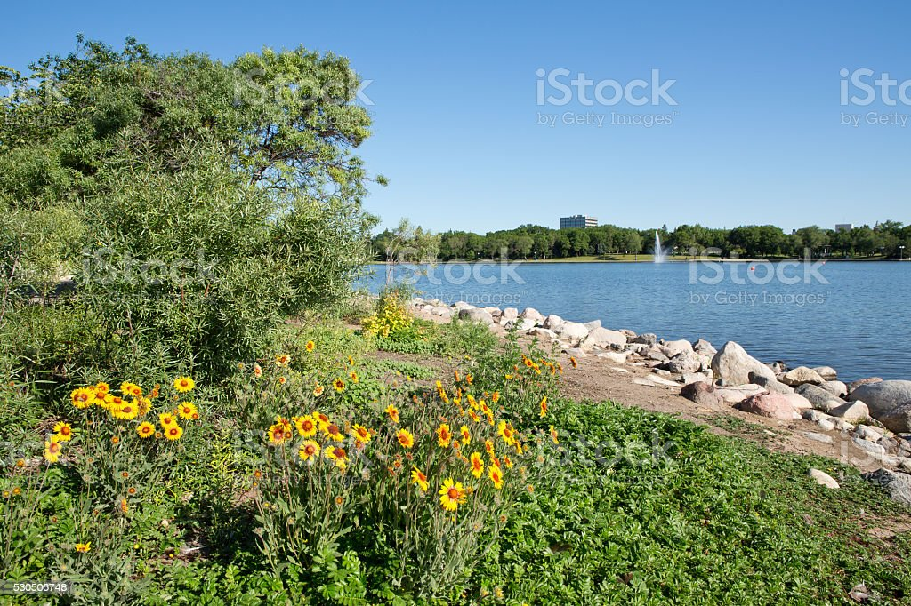 Wascana Lake in Regina with fountain and yellow flowers stock photo