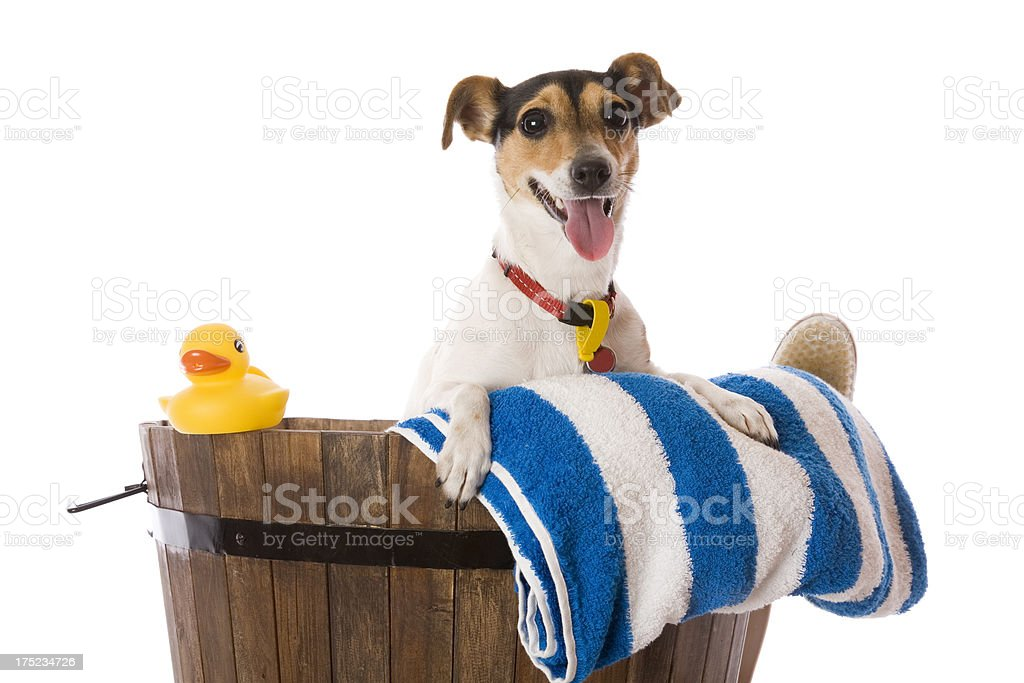 Wash Time royalty-free stock photo