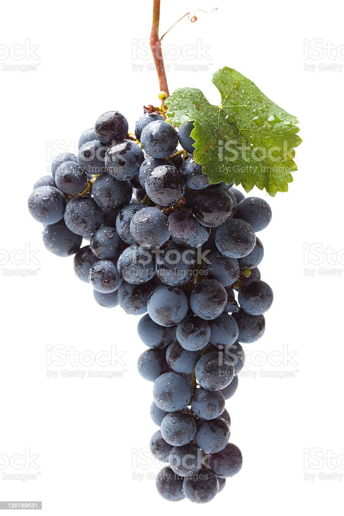 Washed blue grape cluster on white royalty-free stock photo