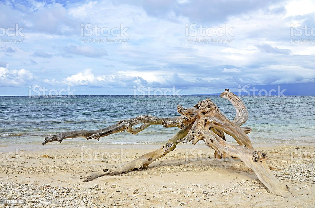 Washed out driftwood on sandy beach stock photo