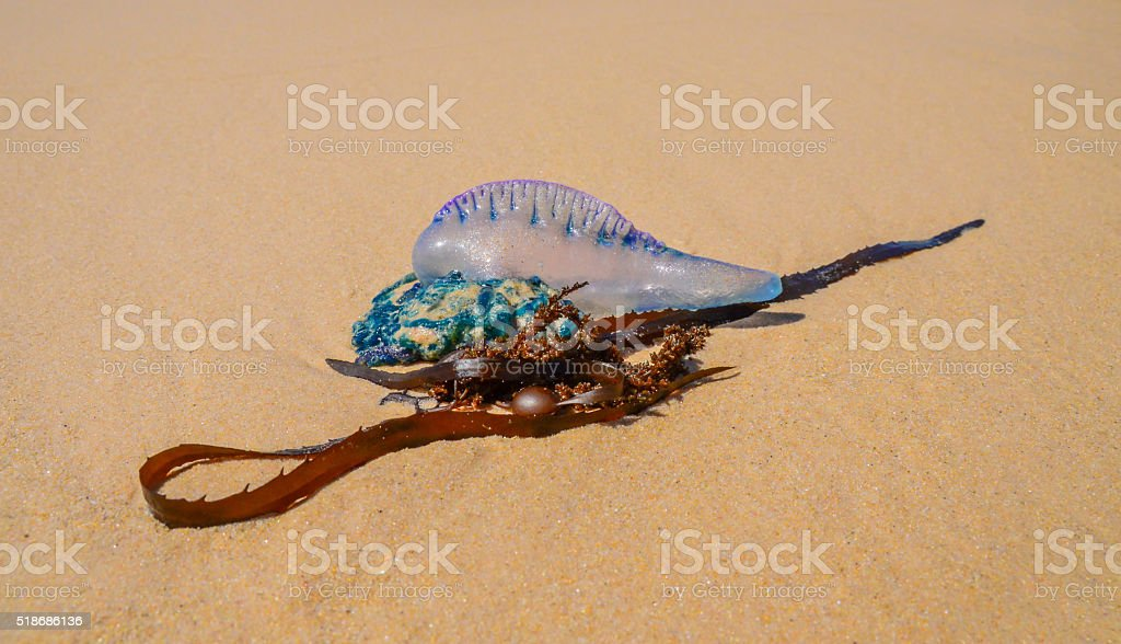 Washed Up stock photo