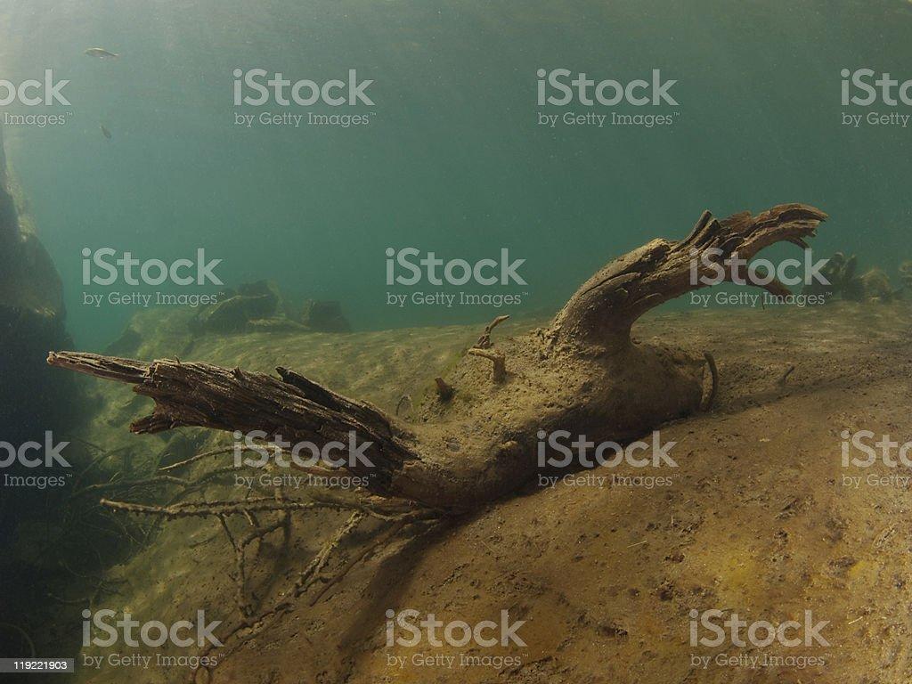 washed wood underwater stock photo
