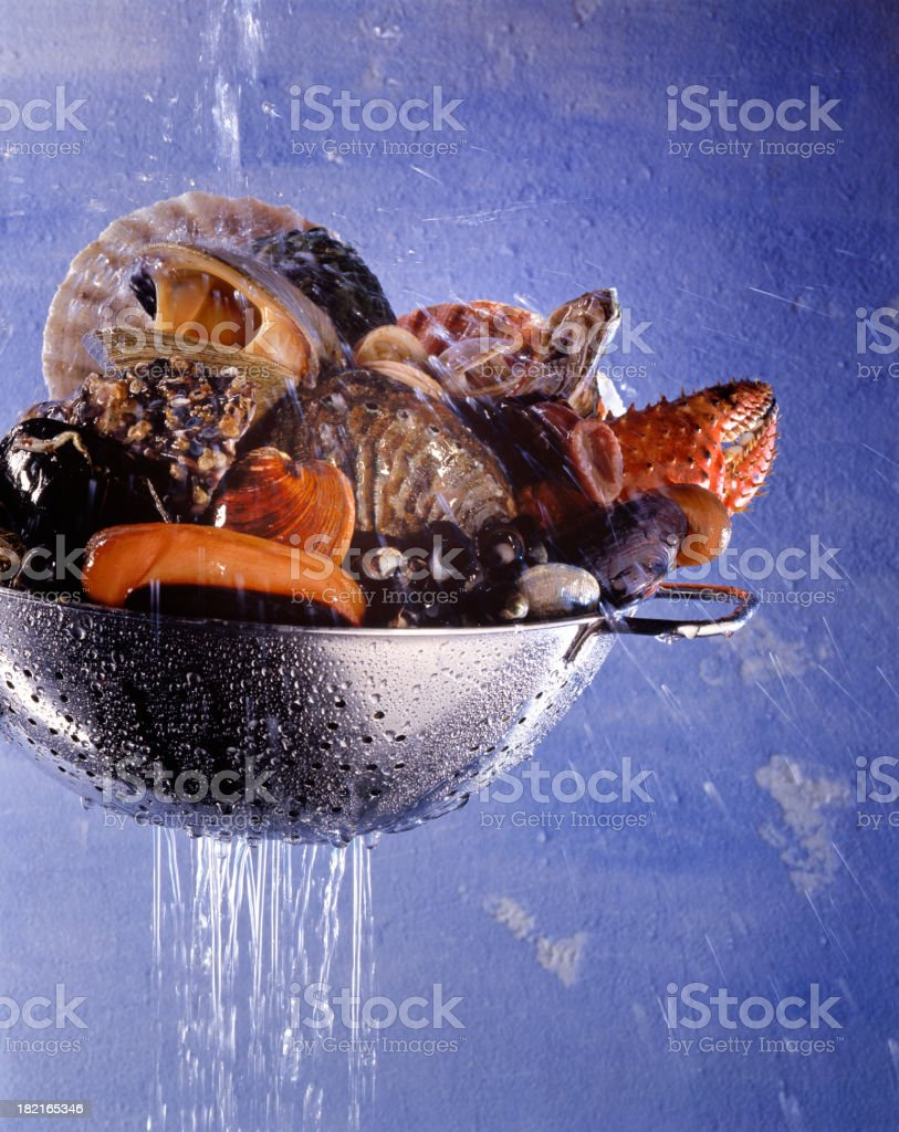 washing shellfish and crustacean in colander stock photo