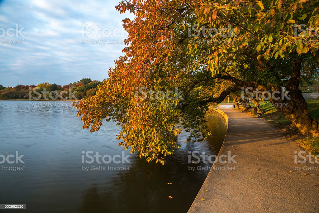 Washington DC Cherry Trees with Autumn Foliage royalty-free stock photo