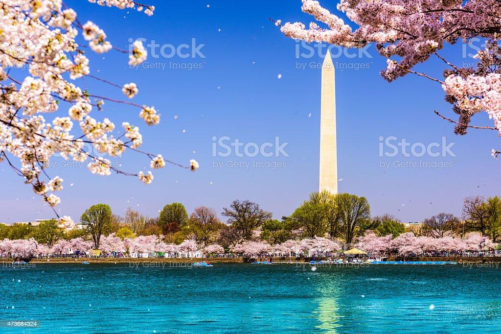 Washington Memorial in Spring stock photo
