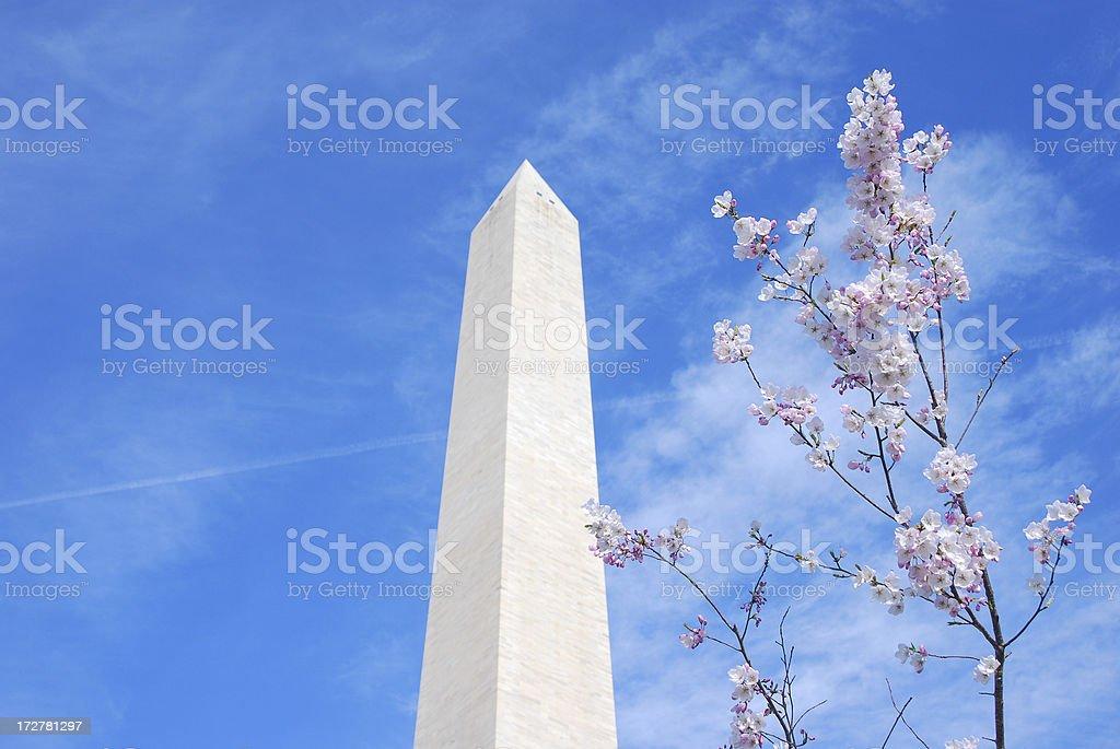 Washington Monument and Cherry Blossom, Mar 29, 2008 stock photo
