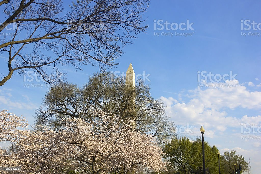 Washington Monument during cherry blossom royalty-free stock photo