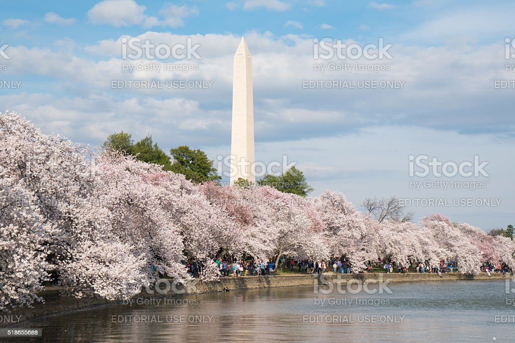 Washington Monument during the Cherry Blossom Festival stock photo
