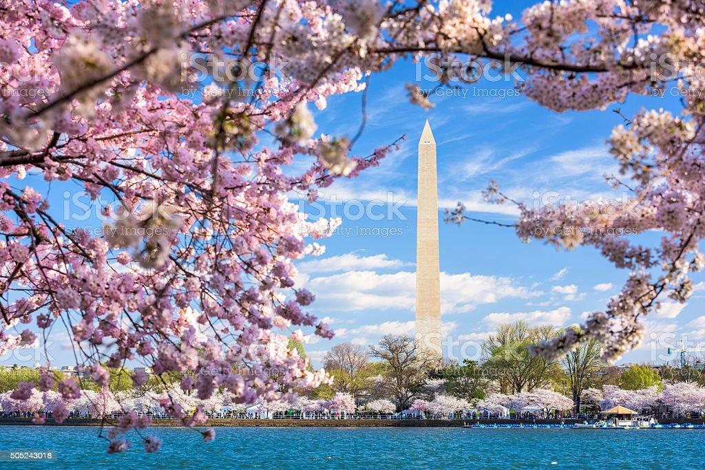 Washington Monument in Spring stock photo