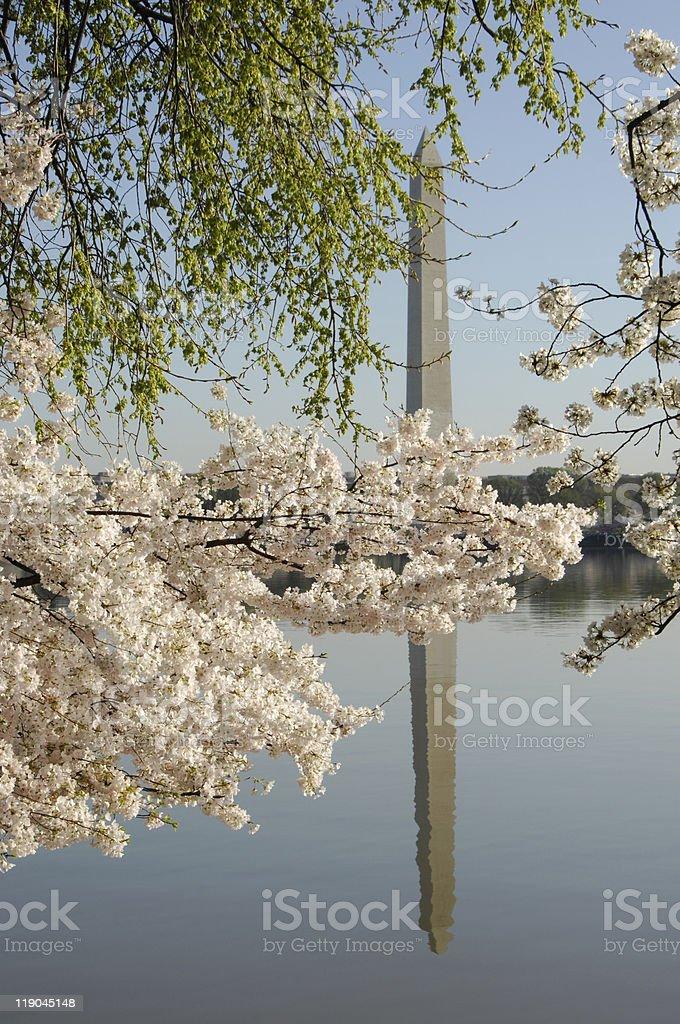 Washington Monument Reflection stock photo