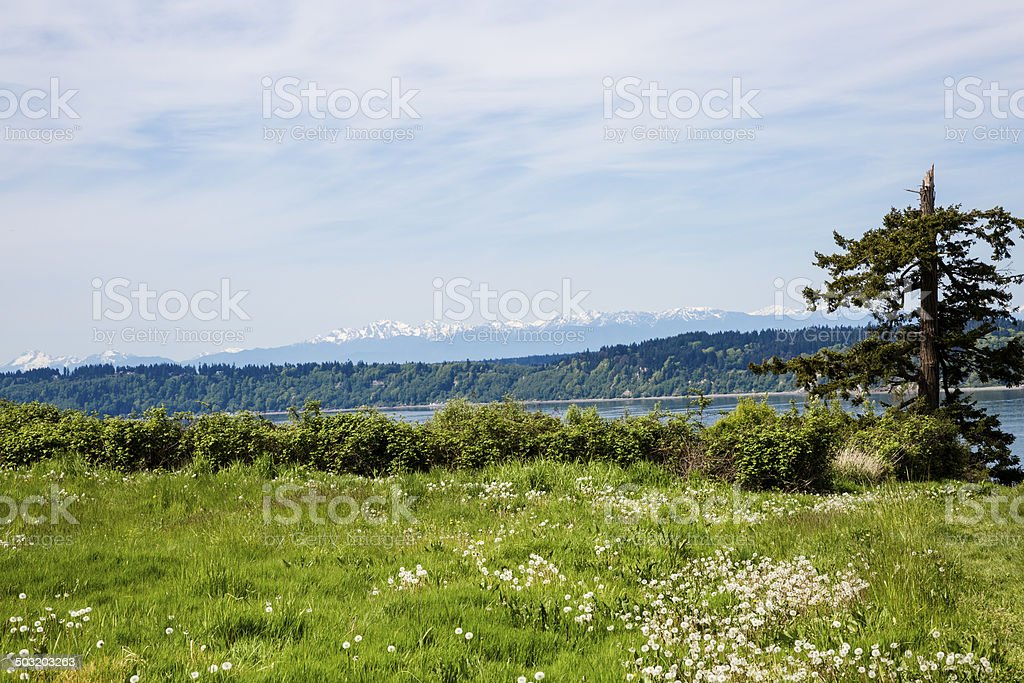 Washington State Spring Meadow stock photo