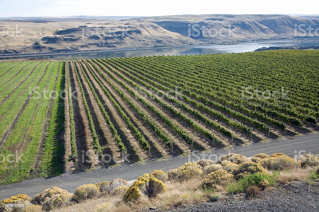 Washington Vineyards And Columbia River Gorge royalty-free stock photo