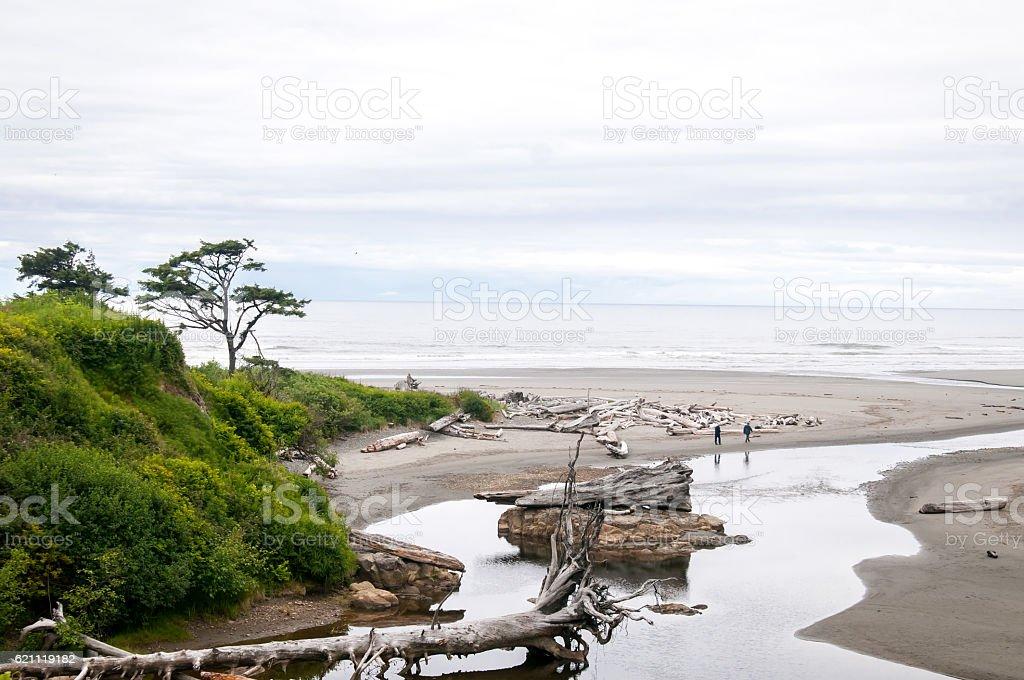 Washinton Driftwood Beach stock photo