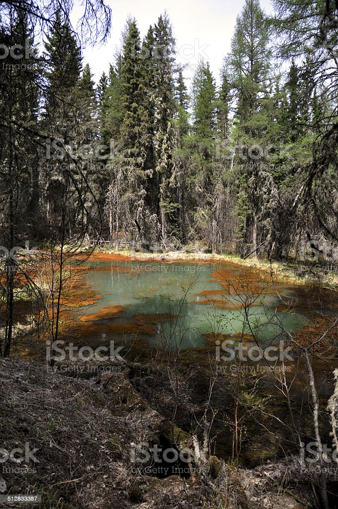 Waskisieu Forest spring with colorful mineral water and pine trees stock photo
