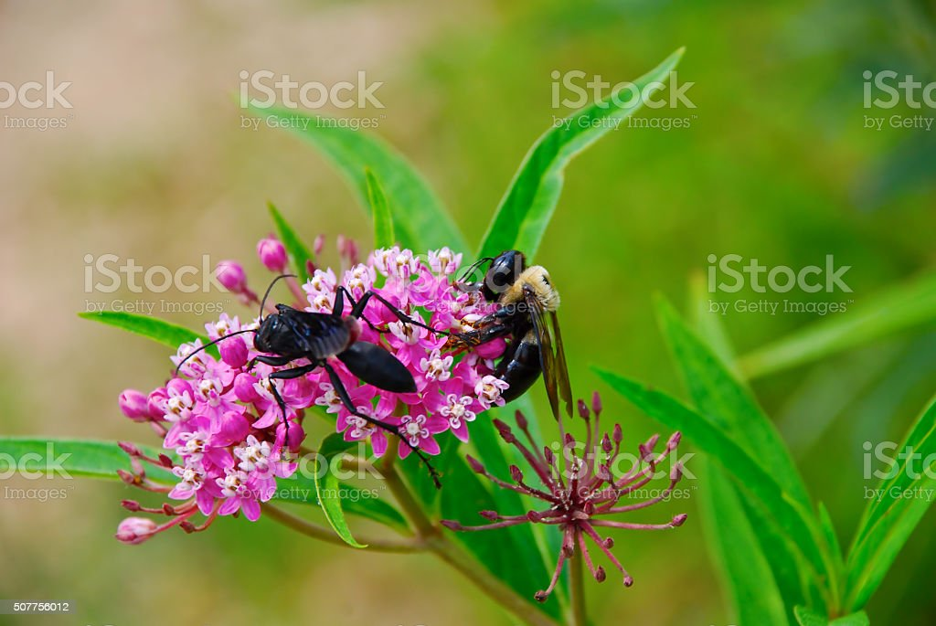 Wasp and bee on a flower valerian stock photo
