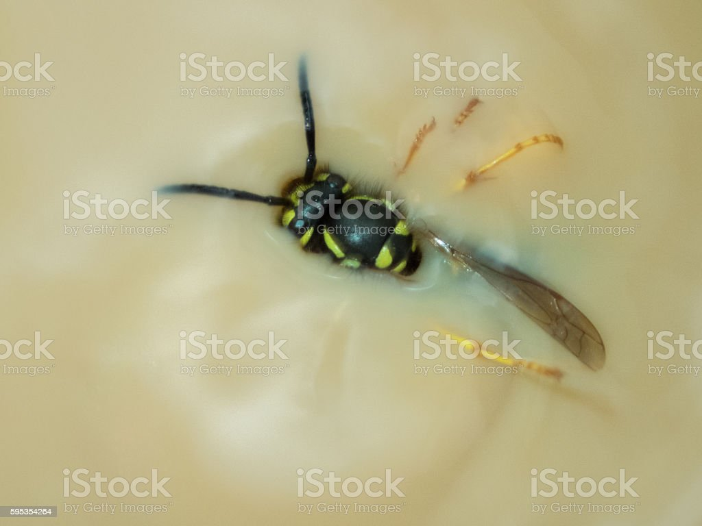 Wasp in a coffee with milk stock photo