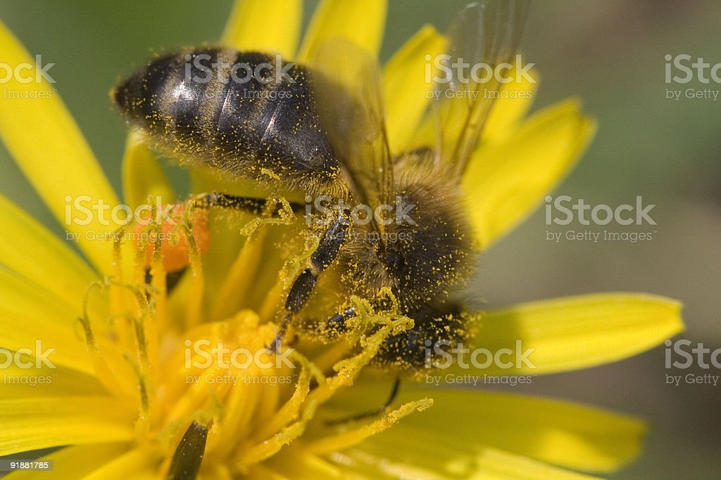 Wasp in a flower stock photo