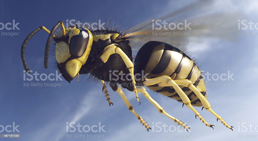 Wasp in flight stock photo